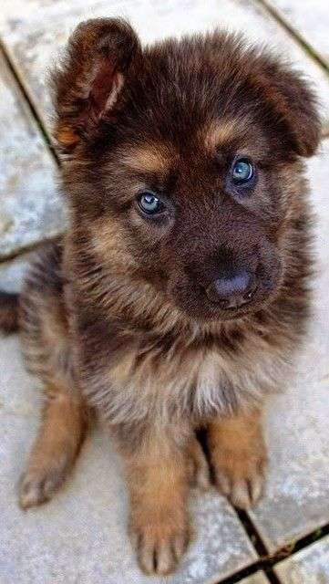 Strangest Hybrid Dog Breeds You Never Knew Existed Dogs - 16 fluffy cute animal species world