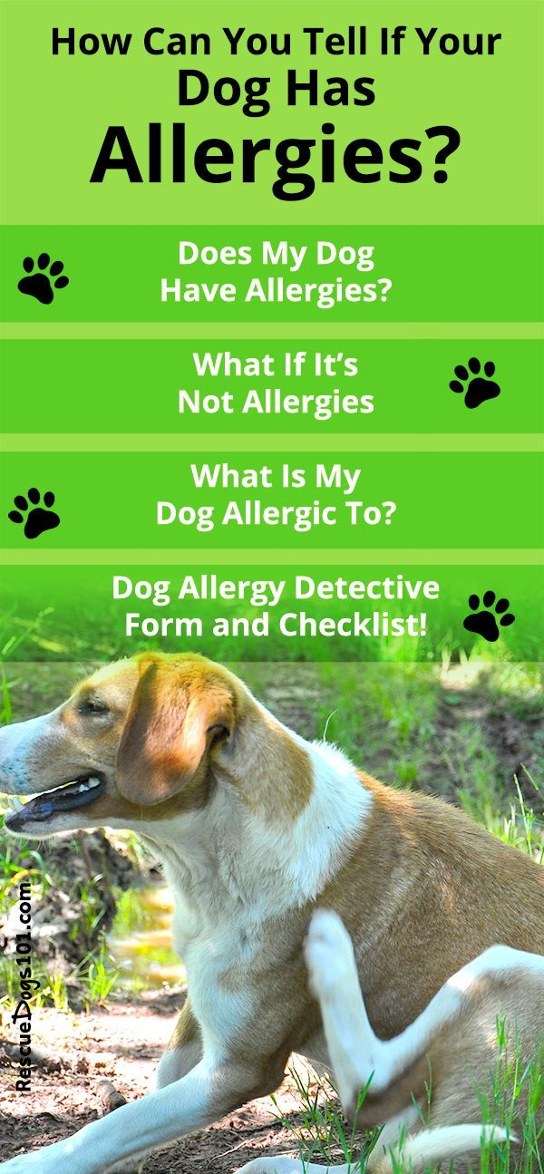 What Is My Dog Allergic To? Seasonal Environmental or ...