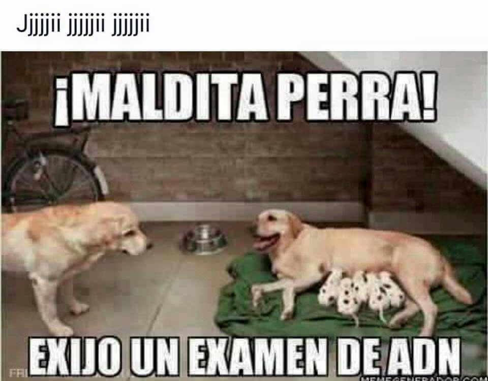 Pin De Nitza I Marin En Buen Humor Y Risas Memes Perros Chistes De Animales Memes Divertidos