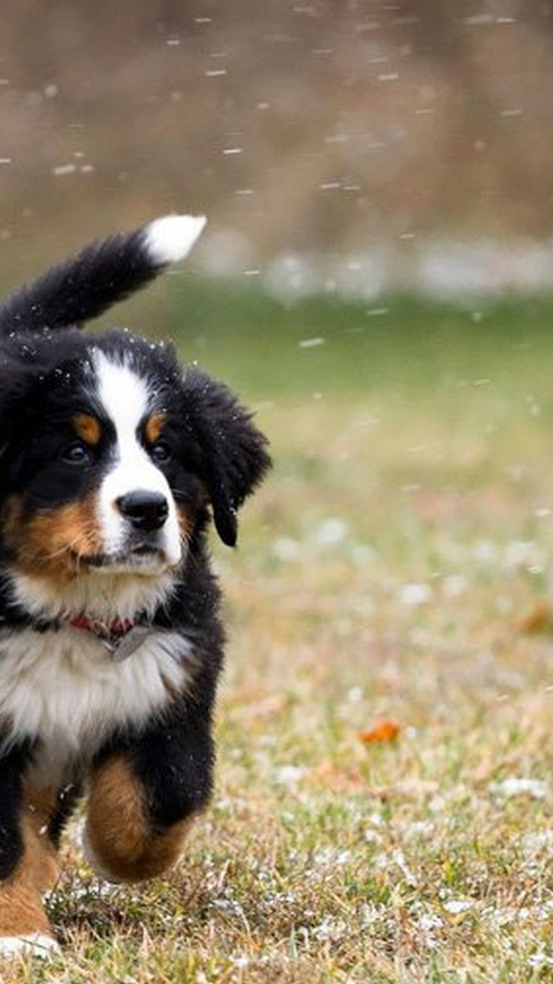 Android Wallpaper Cute Puppies Pictures Best Android Wallpapers Cute Puppy Pictures Puppy Pictures Cute Puppies