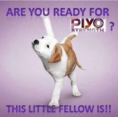 Pyo canine