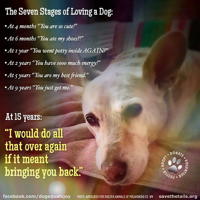 I Miss Buddy And Sadie Dog Quotes Dog Poems Stages Of Love