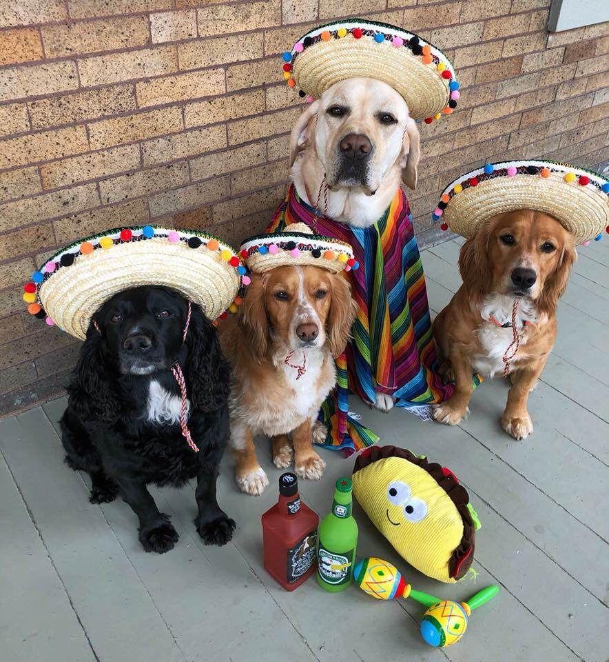 Pin by Amber ConradBurton on 2019 Funny animals, Dogs