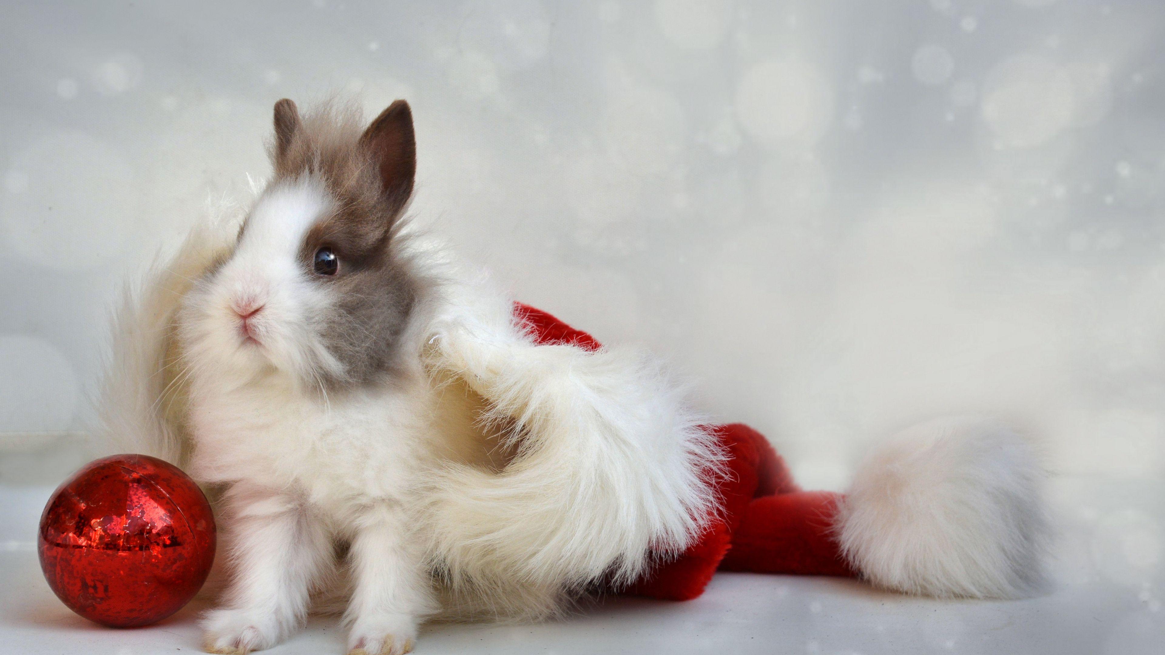 Rabbit New Year Ball 4k Rabbit New Year Ball Rabbit Holiday Wallpaper Christmas Photography