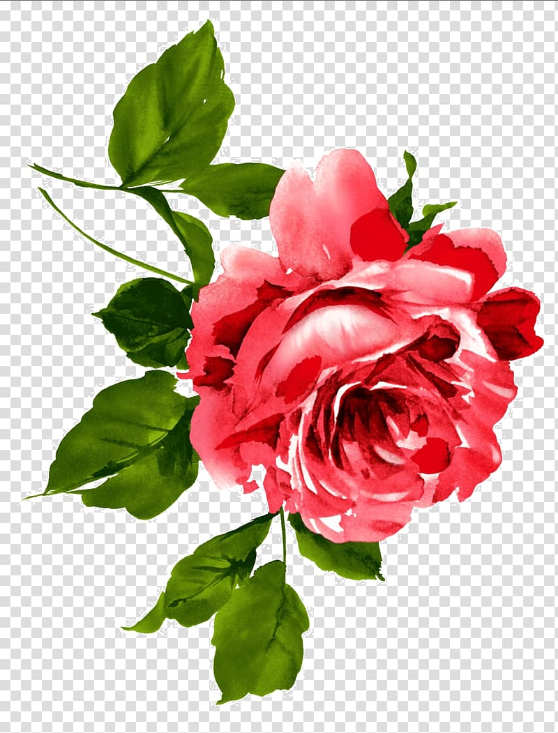 Red Rose Illustration China Flower Peony Floral Emblem Chinese Flowers Transparent Background Png Clipar Rose Illustration Red Rose Drawing Botanical Flowers