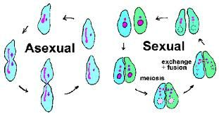 Projects ideas in asexual reproduction