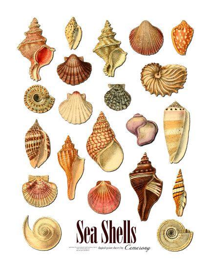 Sea Shells Digital Collage Sheet no256 by Cemerony on Etsy, $2.95 ...