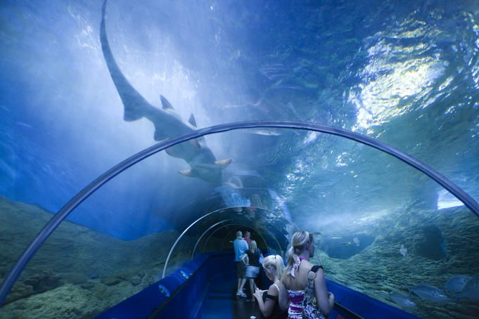 Aqwa Western Australia Shark Gliding Above The Viewing Tunnel As Patrons Look On Aquarium Of Wes Western Australia Travel Western Australia Australia Travel