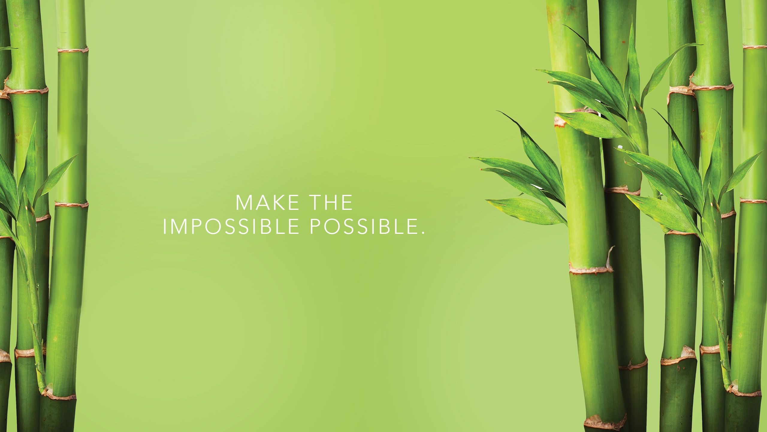 Hd Bamboo Backgrounds Download Bamboo Wallpaper Bamboo