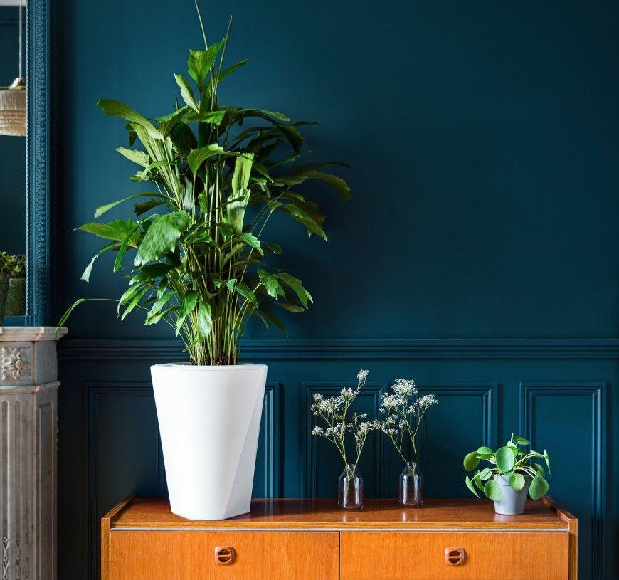 Comment Bien Arroser Ses Plantes Peinture Bleu Canard Fond De