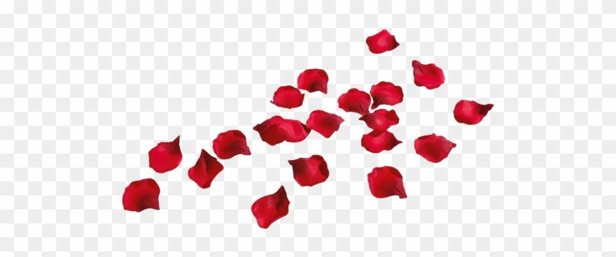 Rose Petals Rose Petals Png Transparent Clipart In 2021 Rose Petals Clip Art Petals