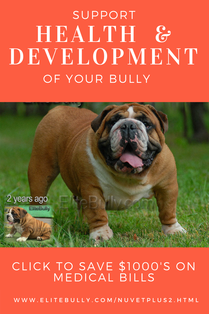 Great Natural Food Supplements To Help Build Immune System Improve Skin Conditions Address Bulldog Bulldog Puppies For Sale English Bulldog Puppies
