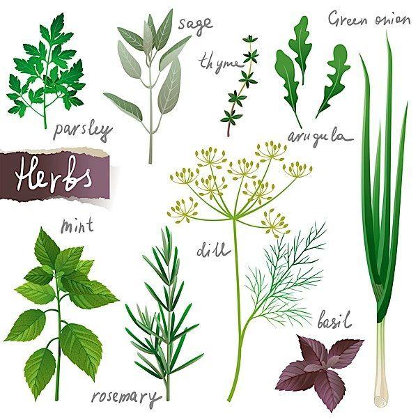herbs mint onion arugula parsley basil rosemary sage 600 600 kr uter. Black Bedroom Furniture Sets. Home Design Ideas