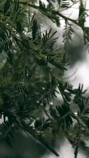 The calming sounds of rain 🌿🌧.