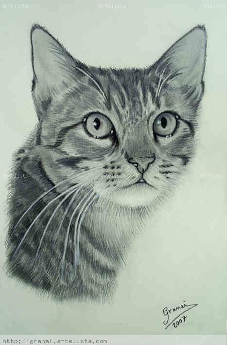 Gatos Dibujos A Lapiz Imagui Dibujo En 2019 Pencil Drawings Of