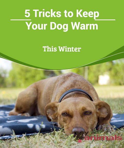 5 Tricks To Keep Your Dog Warm This Winter