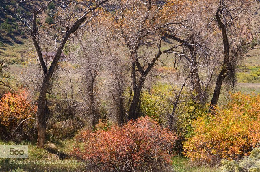 Fall Colors by kimeee #landscape #travel