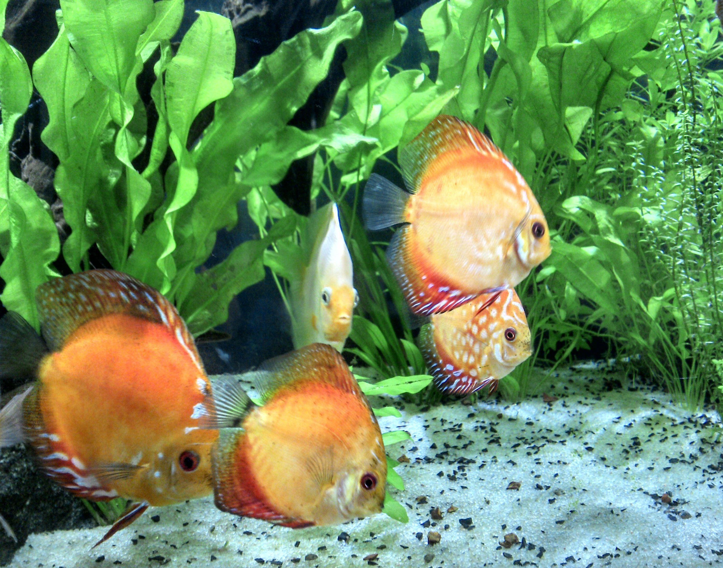 4600b82349f687759711b645d7690a32 Frais De Aquarium Tropical Schème