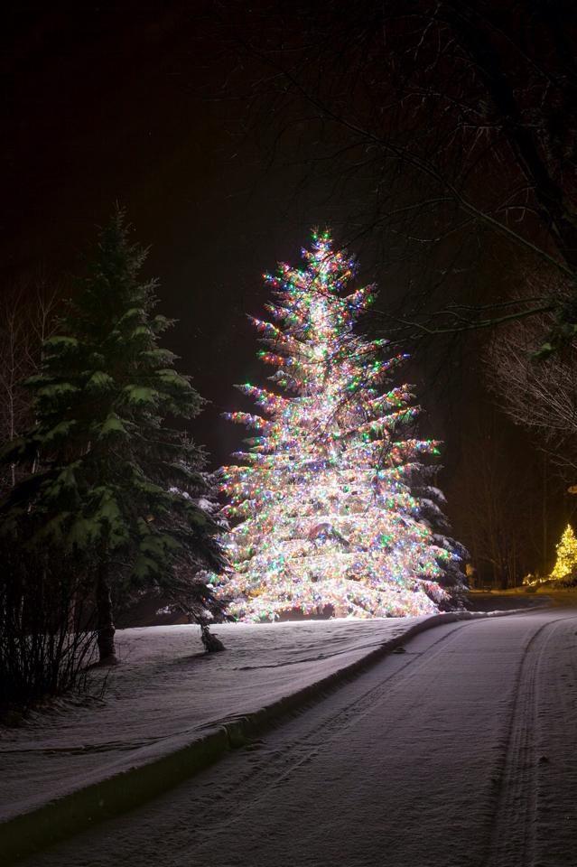 Christmas Tree Lane Winter Wonderland Christmas Christmas Christmas Holidays