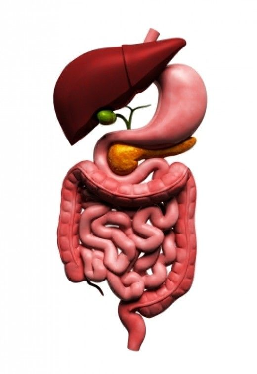 The Organ Systems Of The Human Body Human Digestive System Digestive System Digestion