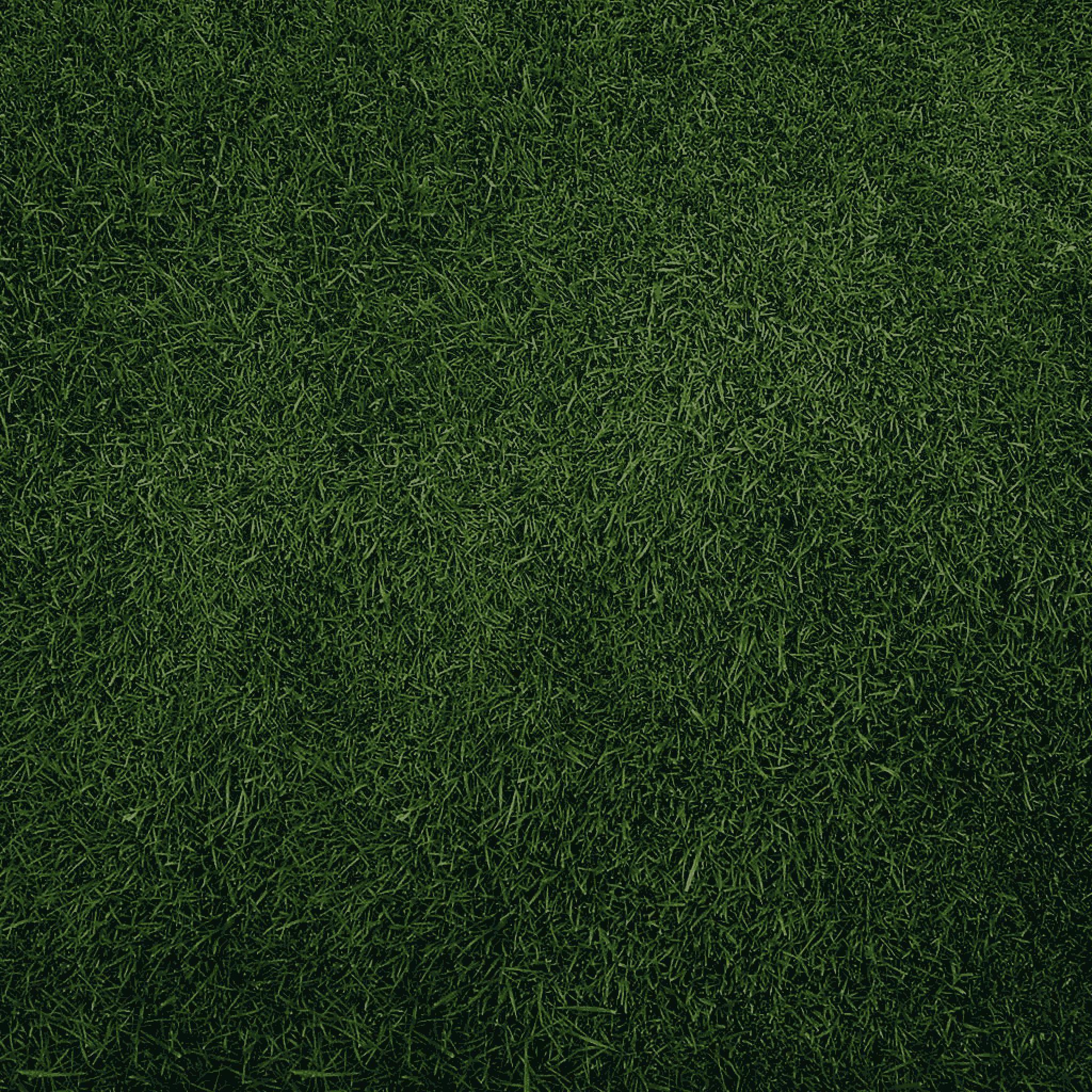 Plain Lime Green Wallpaper wallpaper hd