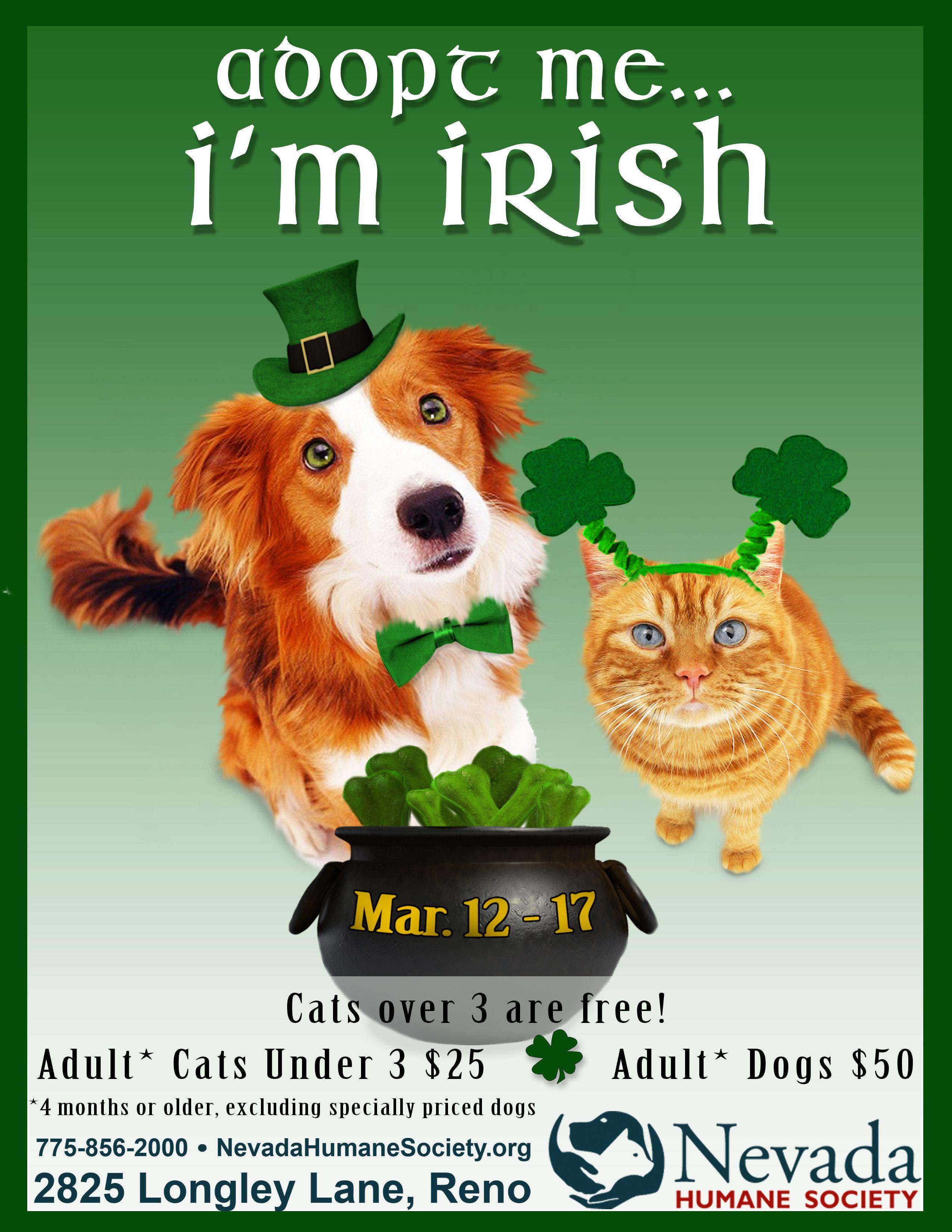 Saint Patrick S Day Pet Promotion 2014 Adult Dogs Humane