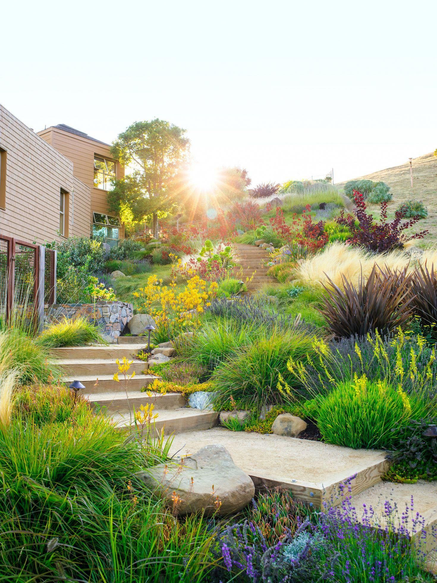 Water Wise Garden Design Guide Everything You Need To Give The Hose A Rest From Unthirsty Plant In 2020 Water Wise Landscaping Low Water Gardening Landscape Design