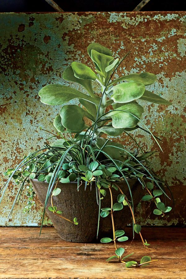 Incredible and Easy Indoor Container Ideas | Pinterest | Agaves ...