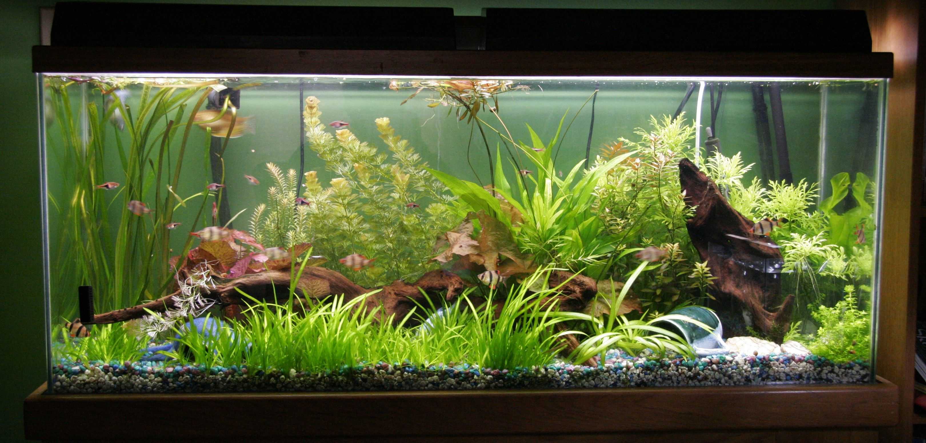 17 best images about freshwater aquariums on pinterest animaux live plants and aquarium - Freshwater Aquarium Design Ideas