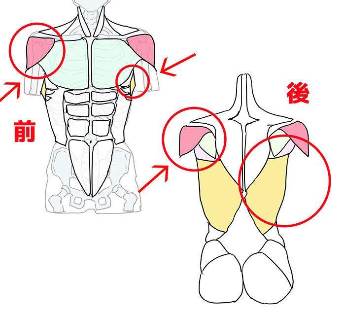 骨格と筋肉をチェック 胴体を描く6つのポイント Drawing Painting