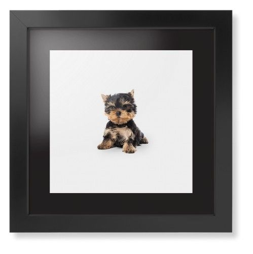Terrier Puppy Framed Print, Black, Contemporary, Black, Black, Single piece, 12 x 12 inches