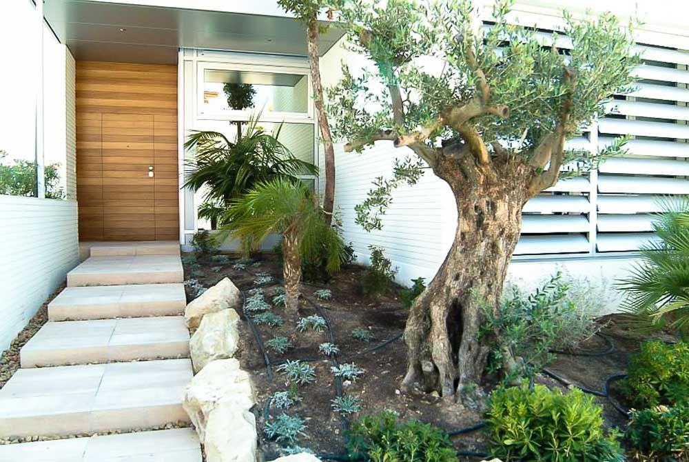 Vista de la entrada #jardín #paisaje #olivo #sol #alicante - paisaje jardin