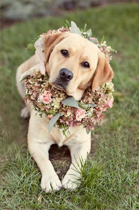 Flower doggy! (My dog won't know what's she's in for, lol) Though a more budget-friendly idea would be to attach edible herbs/flowers to her usual collar instead of ordering a wreath.