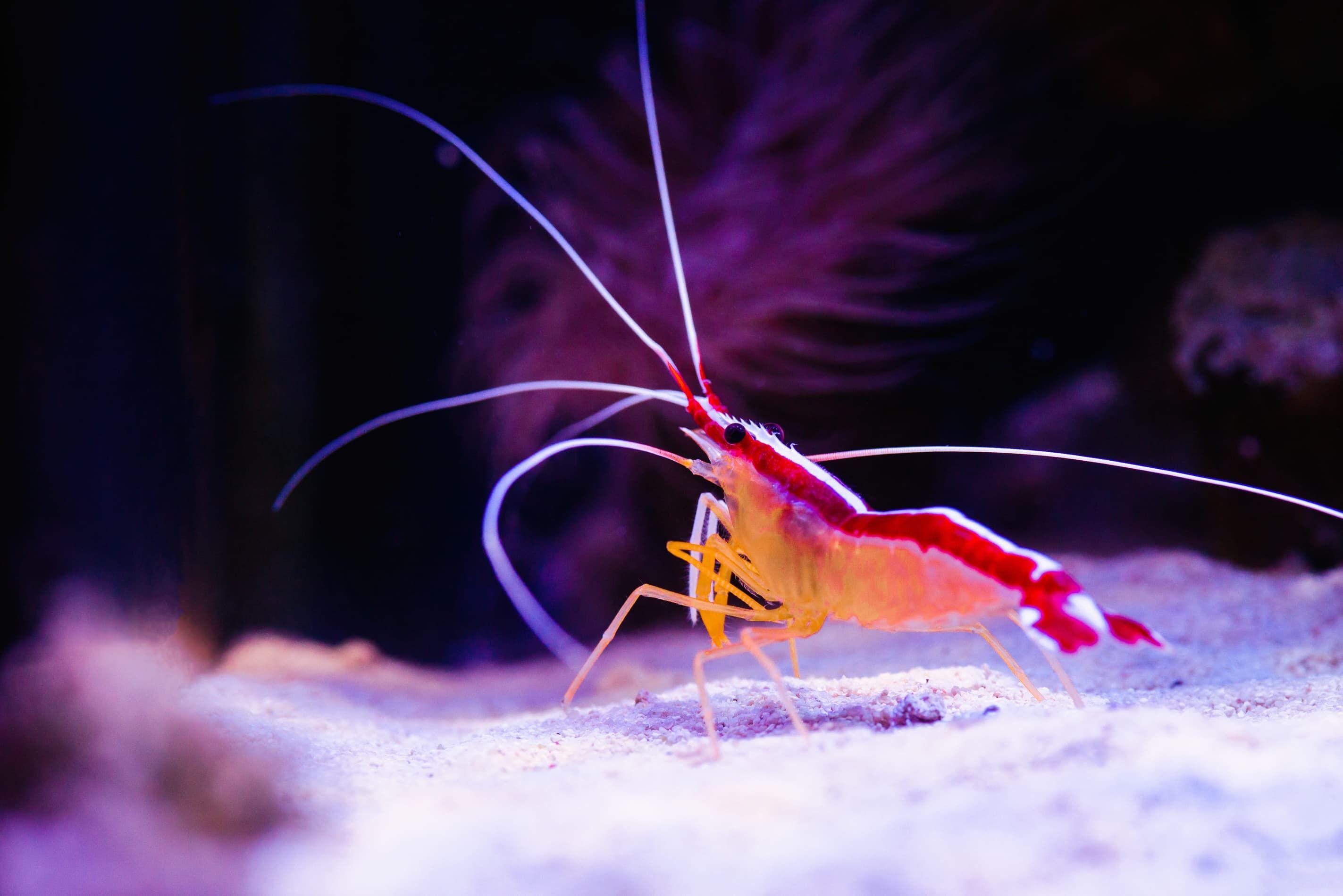 Pin On Shrimp