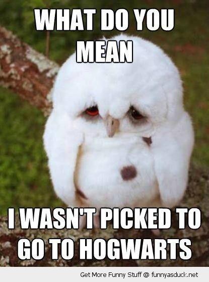 4602a2d1c7bb4e21df054e87d89ff47c sad unhappy cute baby owl picked hogwarts harry potter animal funny