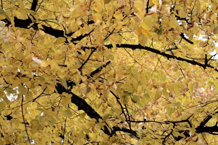 Beautiful Autumn in Helsinki | Photo: Jenni Rotonen / Pupulandia