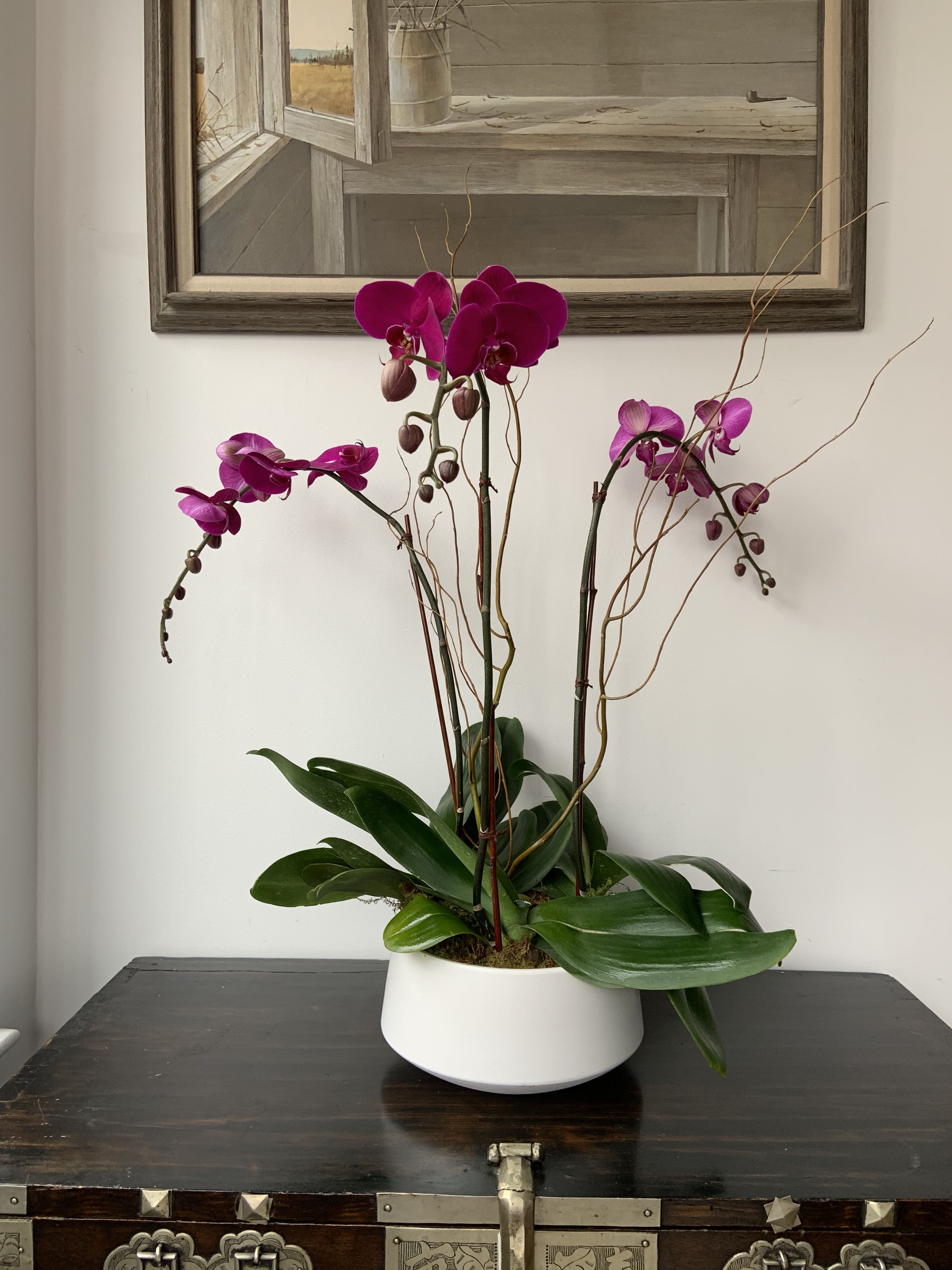 Pin by Alaric Flower Design on Orchids Same day flower