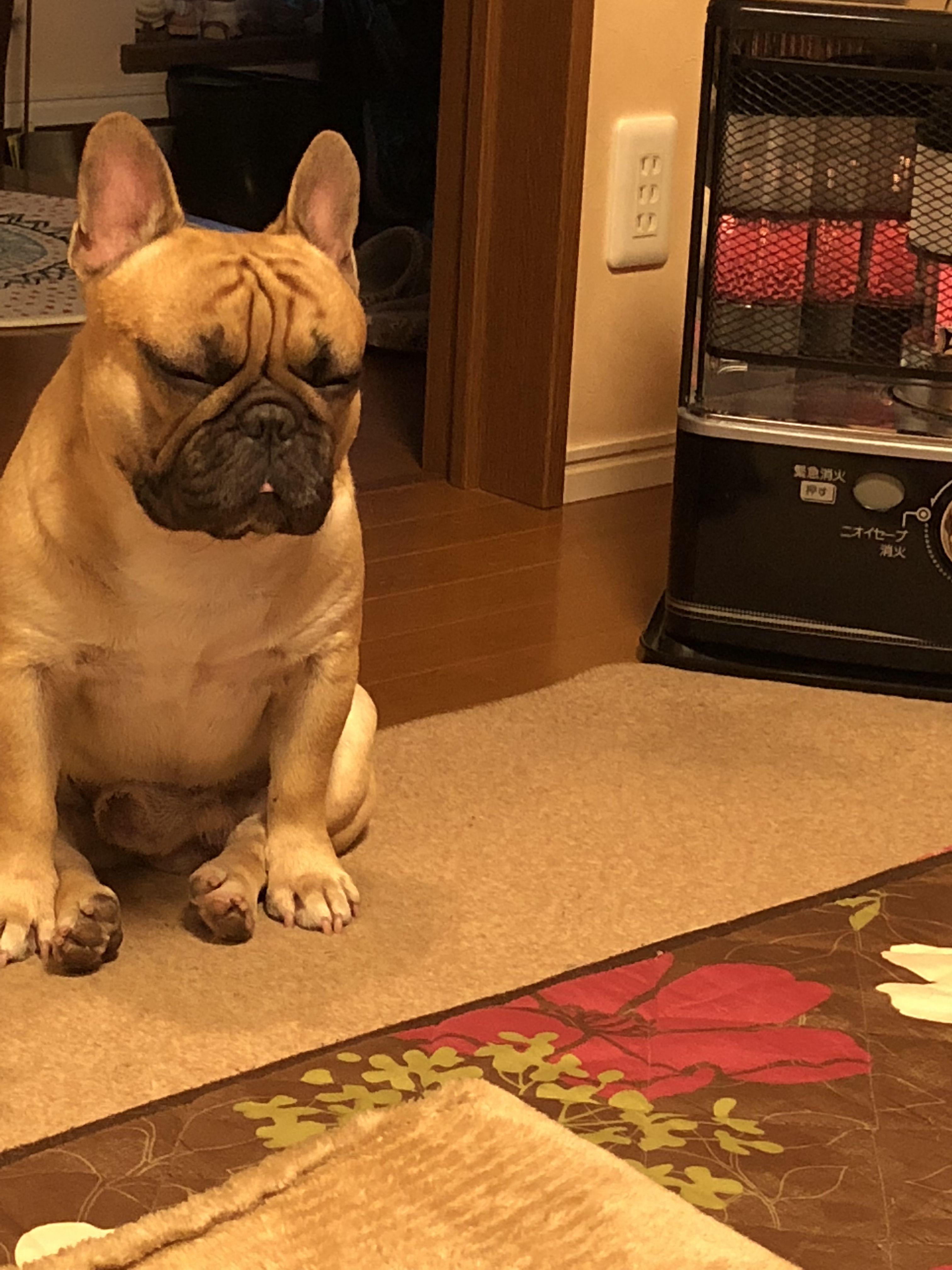 Bully dog by linda boyen on frenchies happy dogs i love