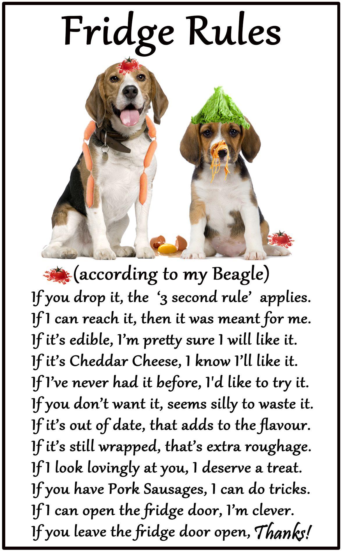 Beagle Hound Humorous Magnetic Dog Fridge Rules Size 6 X 4