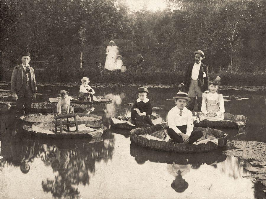 Children Sitting Upon Lily Pads In North Carolina 1892 900x675