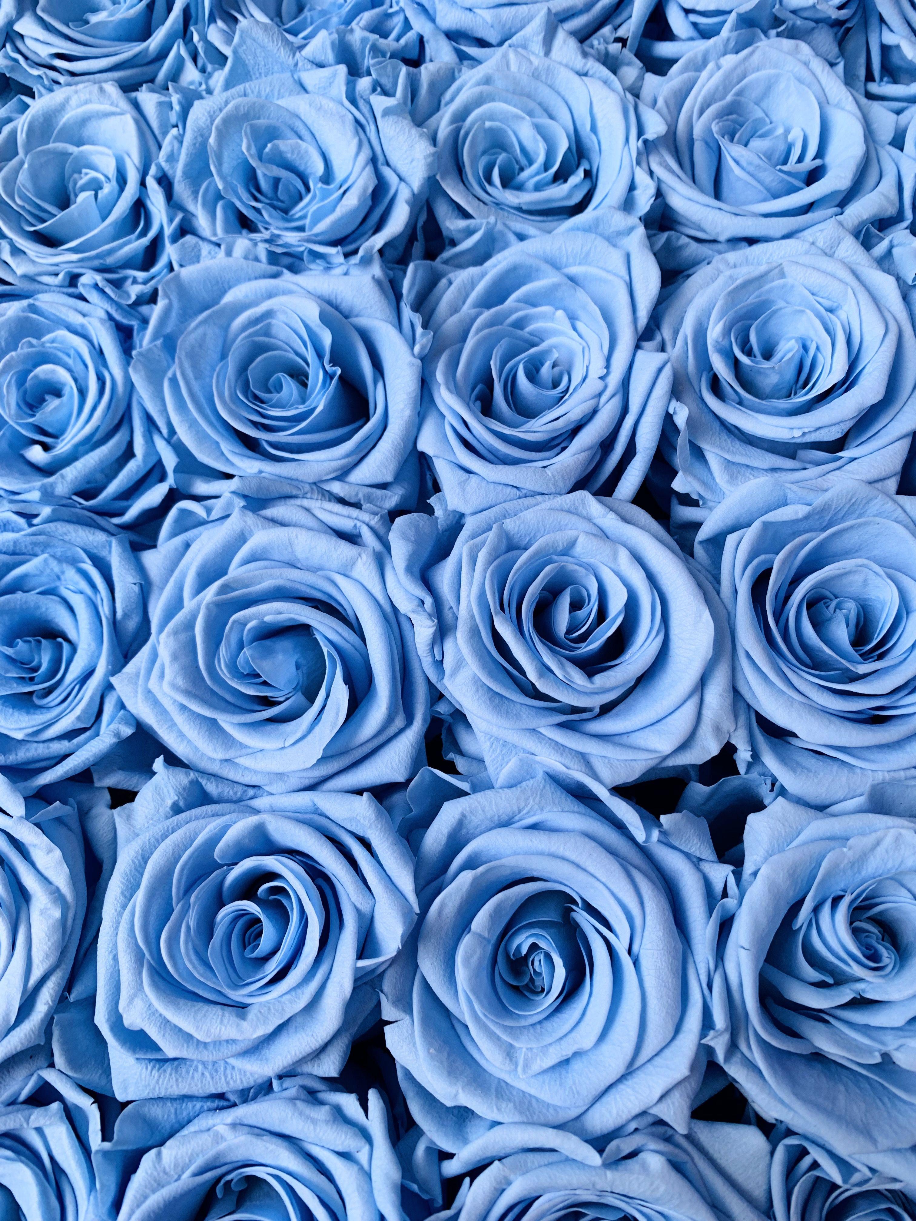 Baby Blue Roses Blue Roses Wallpaper Blue Flower Wallpaper Baby Blue Aesthetic