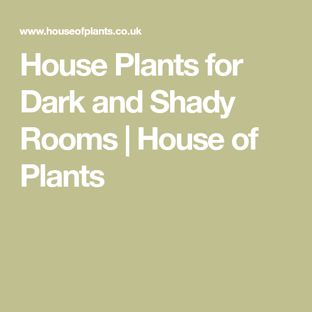 House Plants For Shady Rooms: House Plants For Dark And Shady Rooms