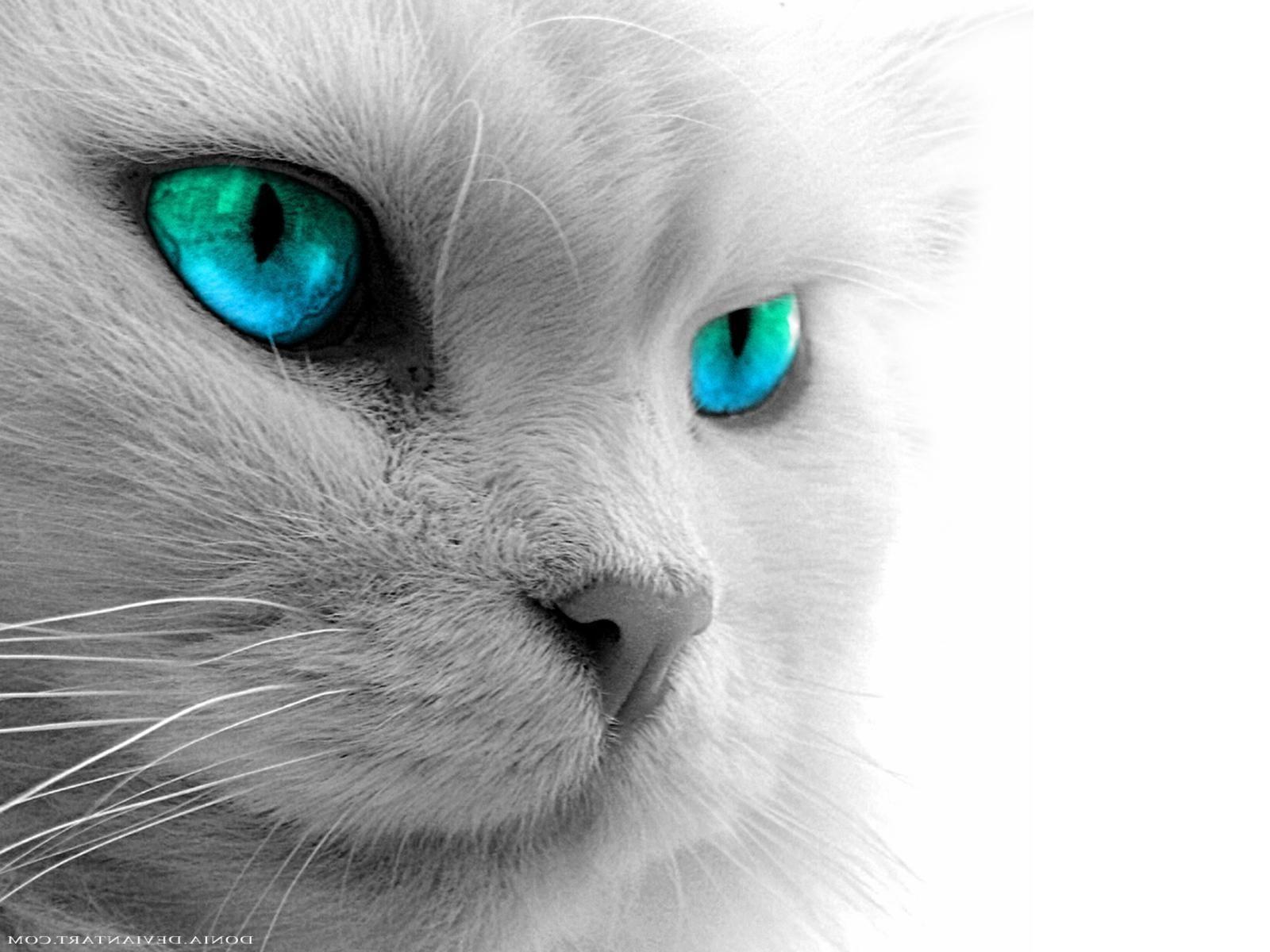Black Cat Eyes Wallpapers Blue Cat Eyes Yellow Cat Eyes Green