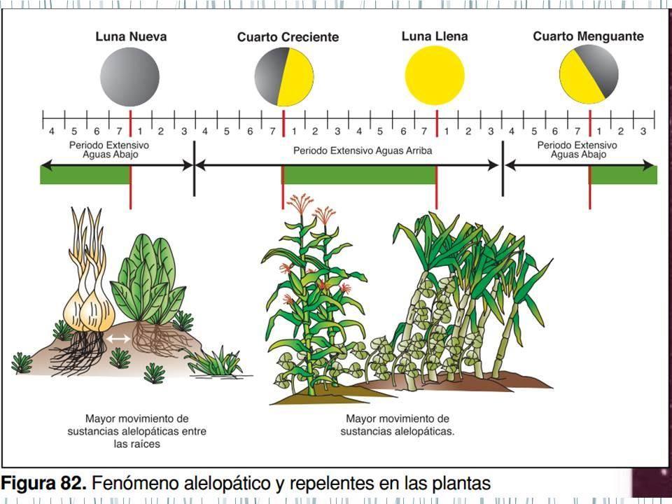 Pin De Red De Permacultura Bioregi N Central Occidental En
