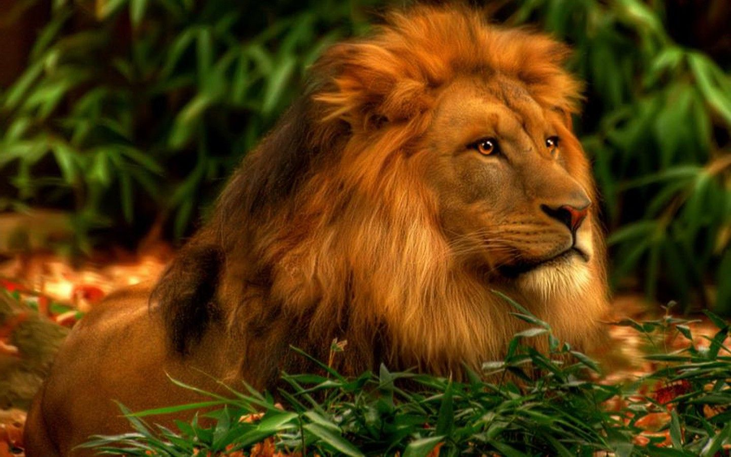 White Lion HD Wallpapers Backgrounds Wallpaper 1600×900