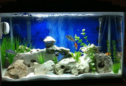Real Texas Holey Rock African Cichlid Tank Fish Tank Decorations
