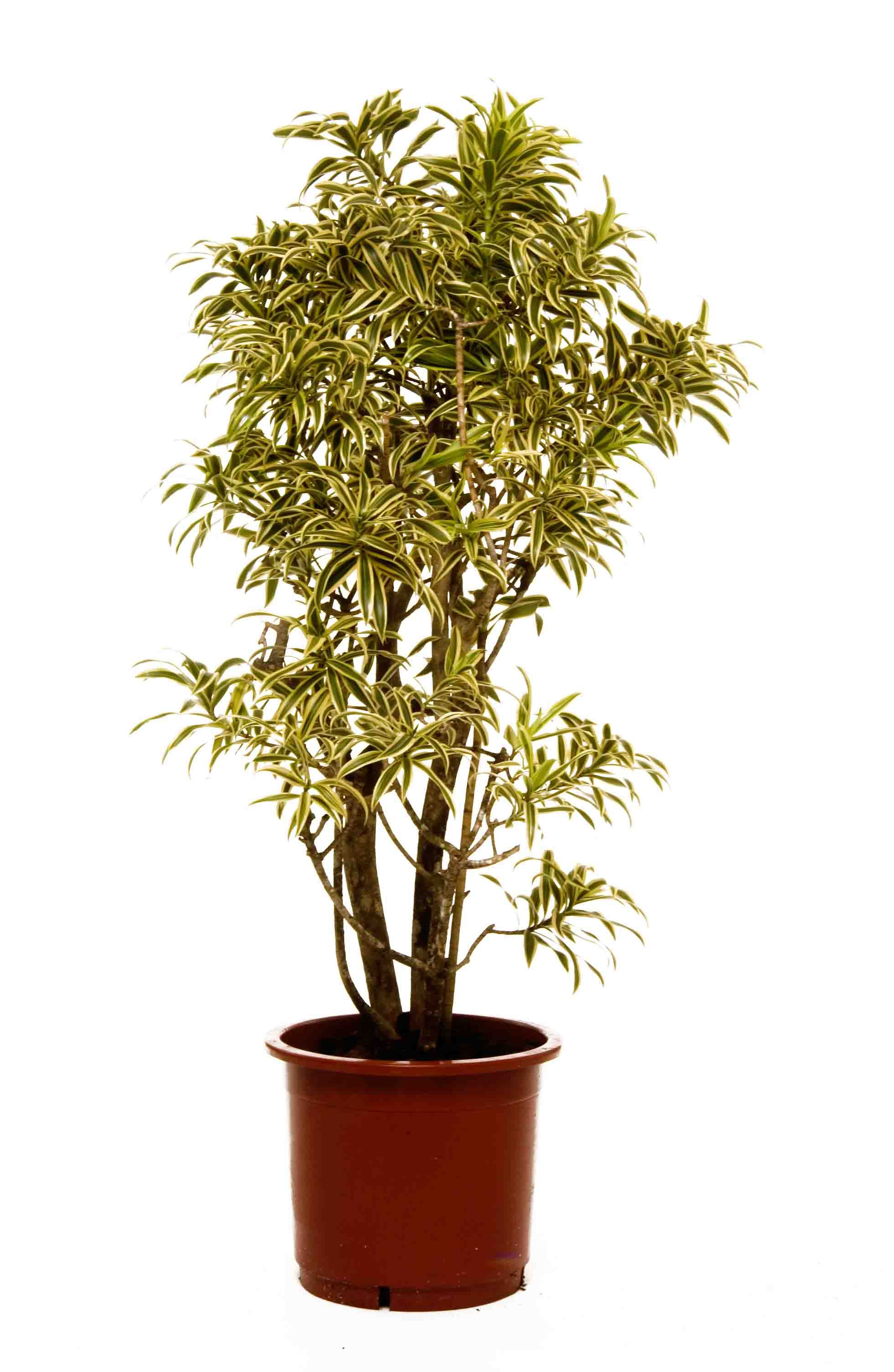great office plants. office plants great pot u0026 tropical for your offices
