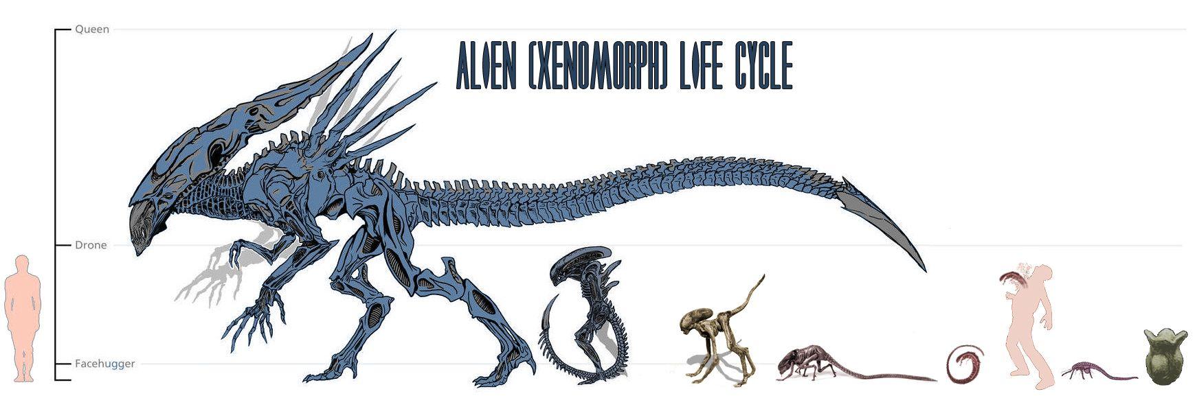 Alien (Xenomorph) Evolution | ALIENS PROMETHEUS PREDATOR