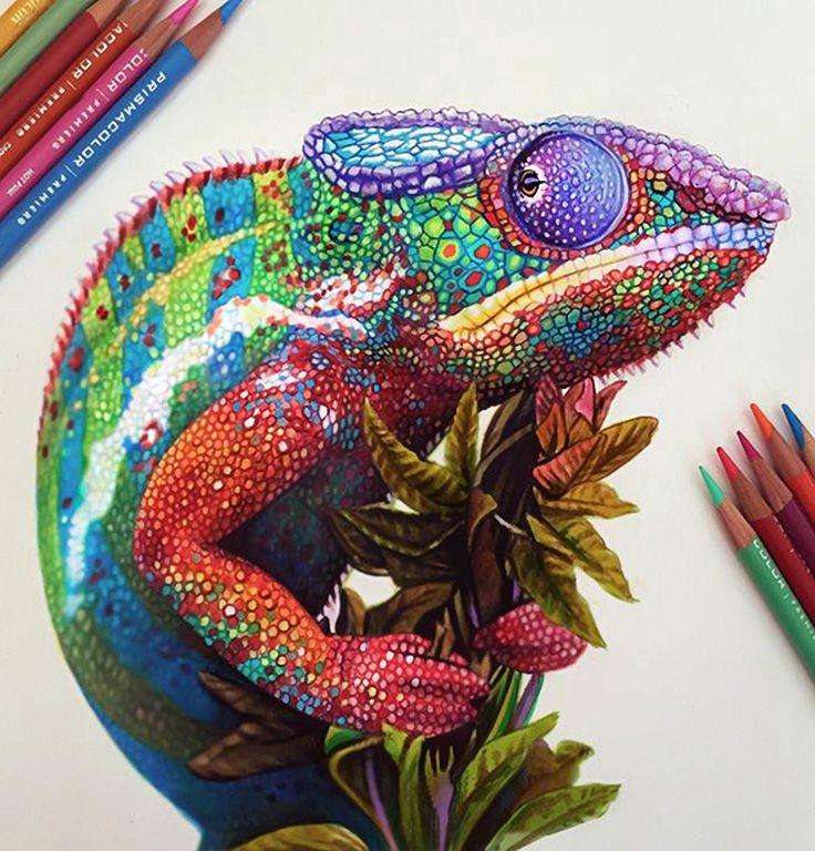 Amazing Colorful Chamilions: Morgan Davidson, Color Pencil {reptile