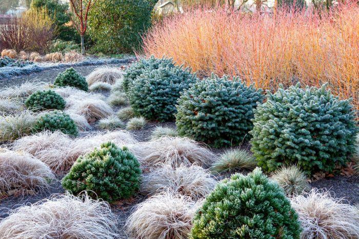 The Winter Garden At The Bressingham Gardens Winter Garden